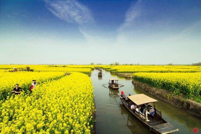 中國興化, 油菜花